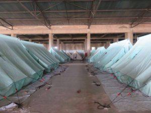 Flüchtlingslager Softex bei Thessaloniki: Fabrikhalle mit Zelten